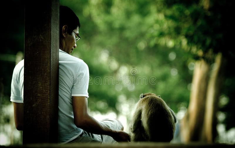 Young man offers some food to a wild monkey in Tanjong Park, Malaysia stock photo