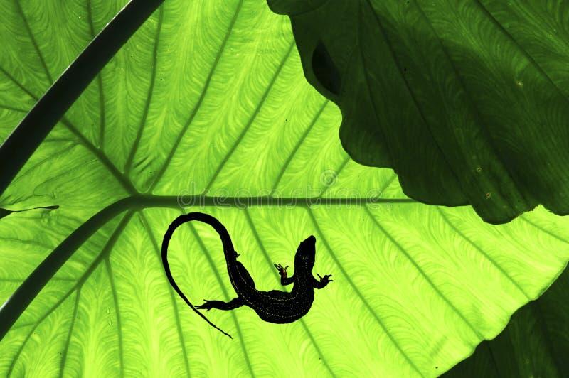 Malaysia, Penang: Vegetation im Dschungel lizenzfreie stockfotografie