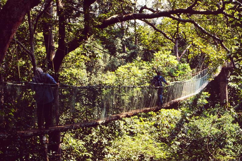 Malaysia: Rain forest hang bridge walk in Taman Negara National. Malaysia: A Rain forest hang bridge walk in Taman Negara National Park the second oldest on royalty free stock photography