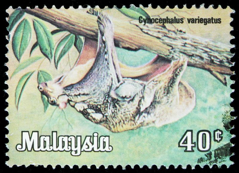 Malaysia shows Malayan Flying Lemur (Galeopterus variegatus), Animals serie, circa 1979. MOSCOW, RUSSIA - SEPTEMBER 22, 2019: Postage stamp printed in Malaysia royalty free stock photography