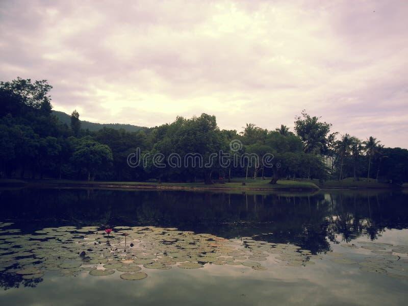 Malaysia Taiping Winter park. One royalty free stock image