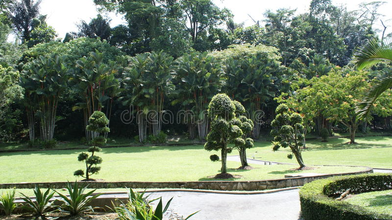 Malaysian flora, a lot of green grass and park. In Kuala Lumpur park stock photos
