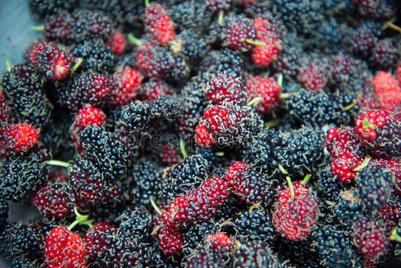 Malberry stockfoto