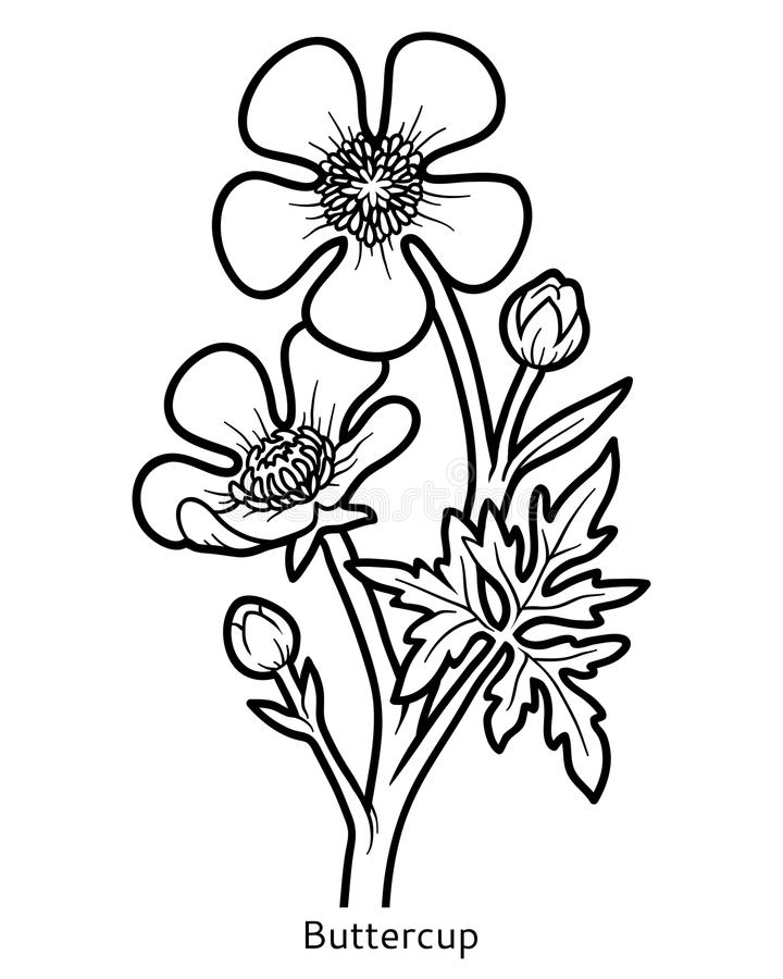 Malbuch, Blume Butterblume lizenzfreie abbildung
