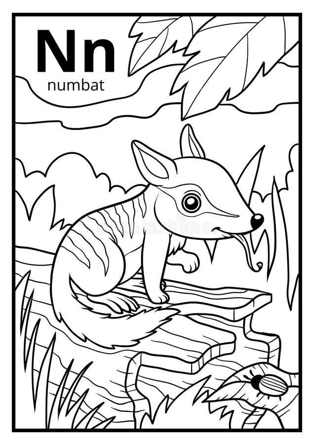 Malbuch, farbloses Alphabet Buchstabe N, numbat stock abbildung