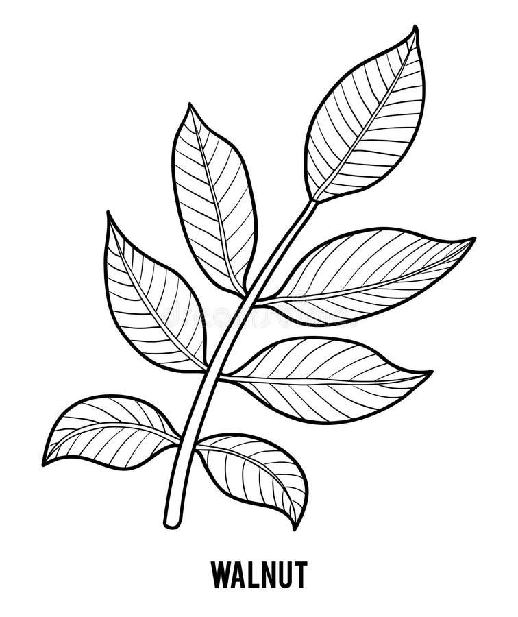 Malbuch, Walnuss stock abbildung