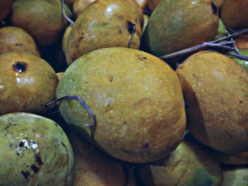 Malcurad Goan Mangos picked from the tree stock photos