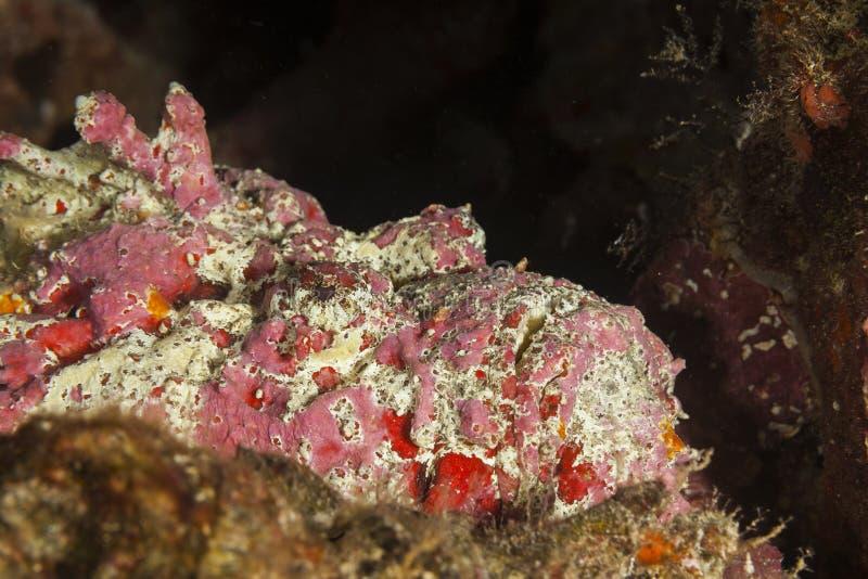 In Maldive, il colore variopinto del underwater e della zanna ha colorato le acque, vari generi di pesce immagine stock libera da diritti
