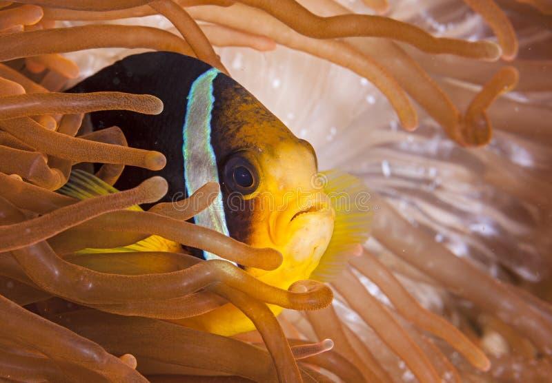 In Maldive, il colore variopinto del underwater e della zanna ha colorato le acque, vari generi di pesce immagini stock