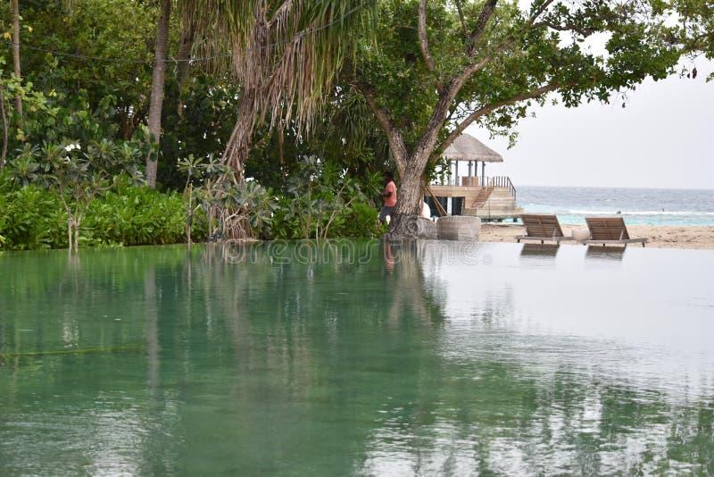Maldiverna strand i afton royaltyfri foto