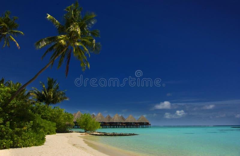 maldives arkivfoton