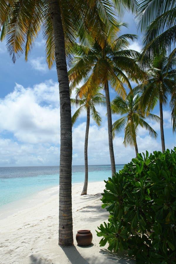 Download Maldives stock image. Image of resort, vacation, coral - 1715767