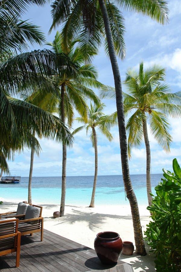 Download Maldives stock photo. Image of lagoon, tree, maldives - 1715788