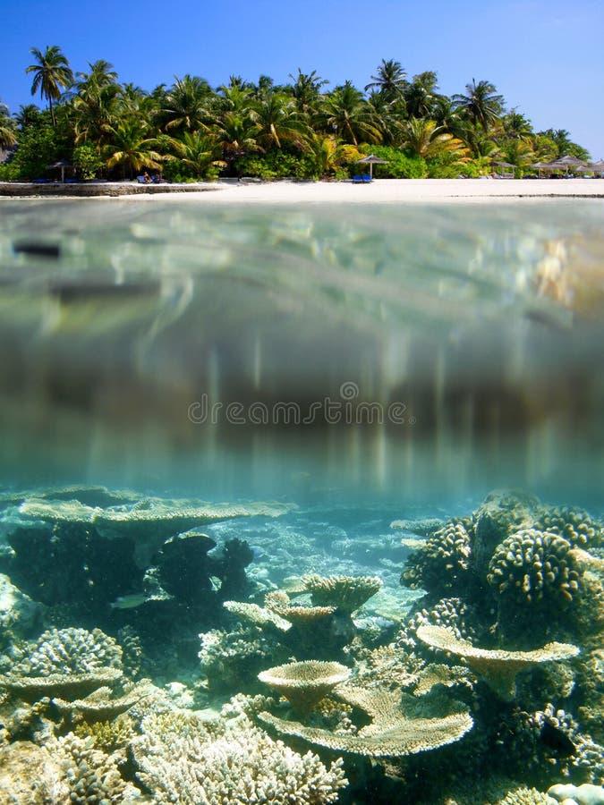 Free Maldives Stock Photography - 37538582