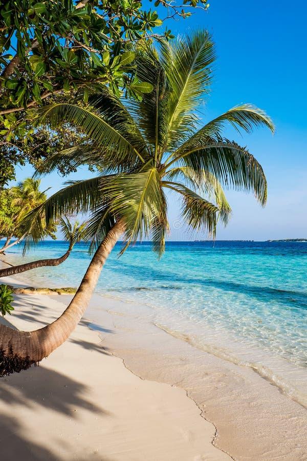 Maldives beach. Sandy beach in the Maldives on a sunny day stock photos