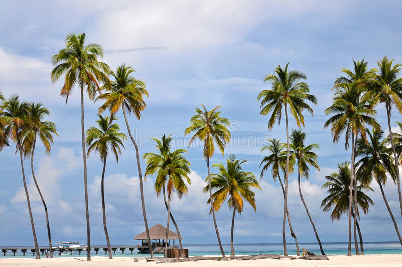 The Maldives coast of palm trees royalty free stock photo