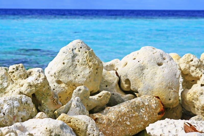 Maldives corais de pedra inoperantes imagens de stock