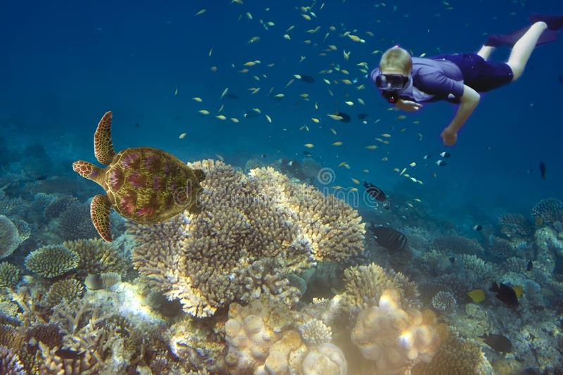 Maldives. The diver at ocean and tropical fishes and turtle in corals.  stock image