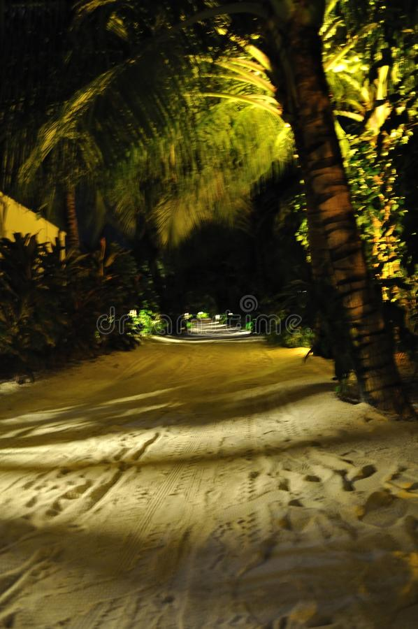 Maldives island beach road under the palms at night. Maldives island beach road under the palms at the night royalty free stock image