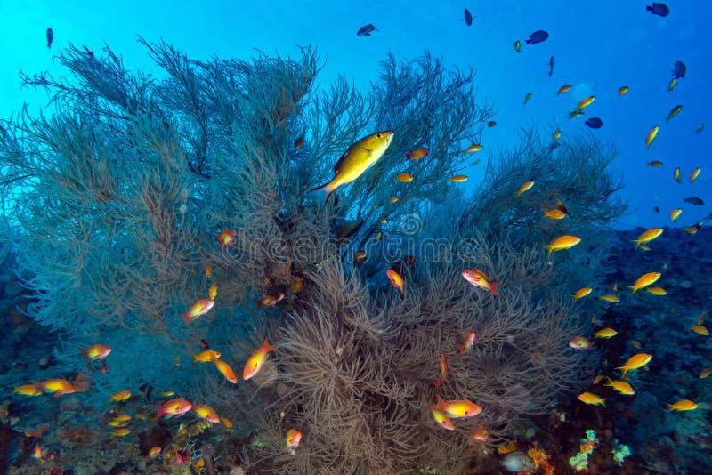 Maldives korali dom dla ryba obraz stock