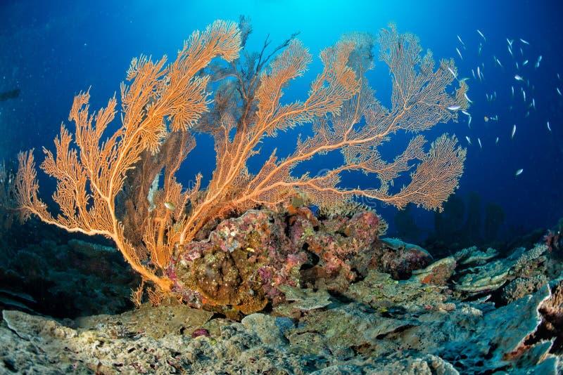 Maldives korali dom dla ryba zdjęcie royalty free