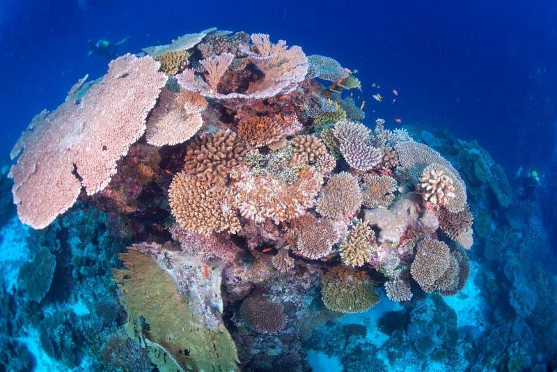 Maldives korali dom dla ryba zdjęcia royalty free