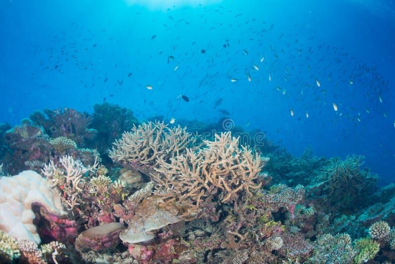 Maldives korali dom dla ryba obrazy royalty free