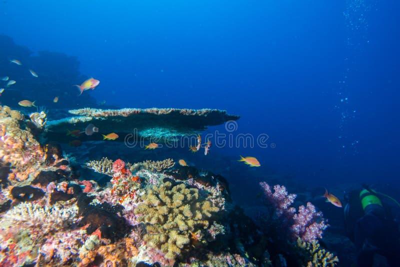 Maldives korali dom dla ryba fotografia stock