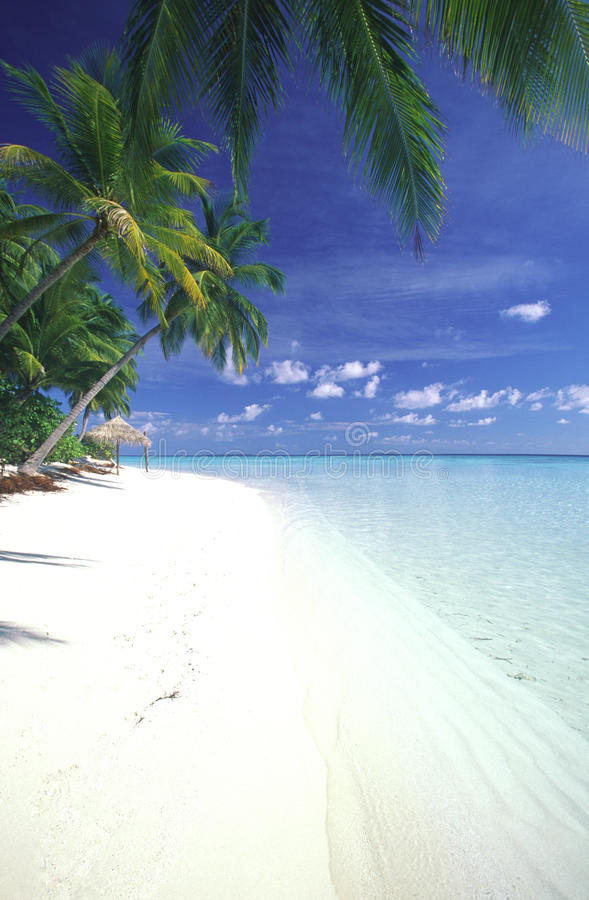 Download Maldives Lagoon And Tropical Beach Stock Image - Image: 12728153