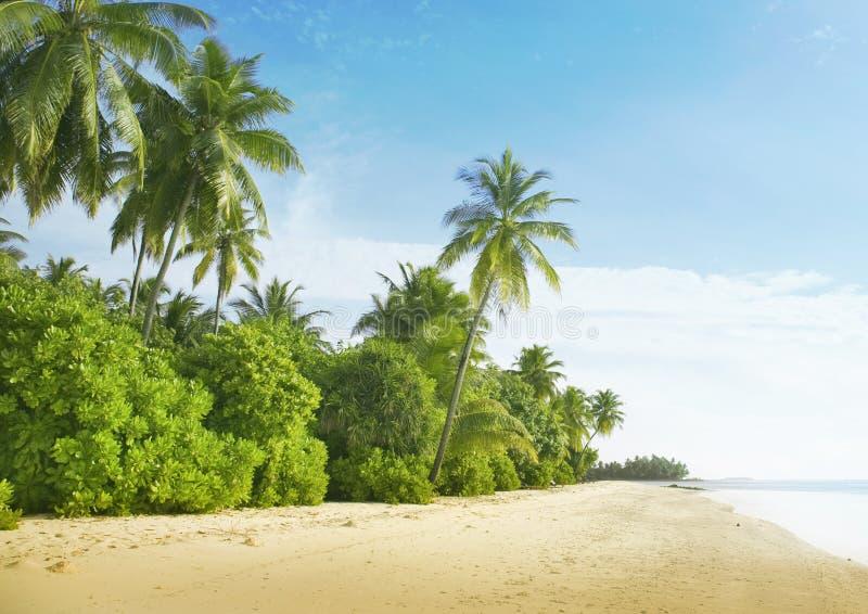 Maldives. Medhufushi Island. royalty free stock images