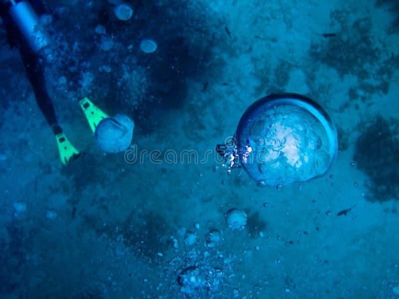 maldives pod wodnym światem zdjęcie royalty free