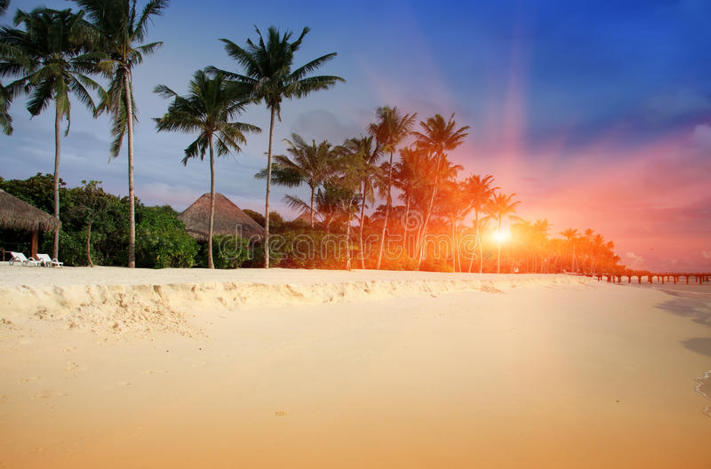 Maldives. A sandy beach, palm and sea coast.  royalty free stock photography
