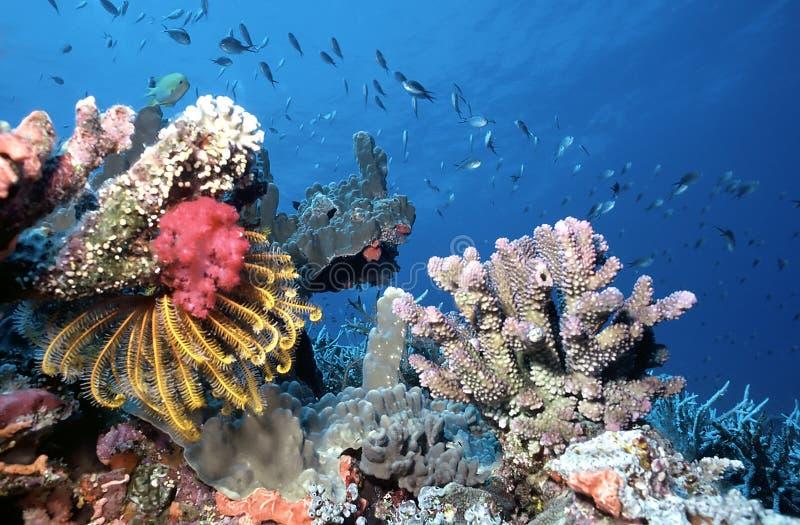 Maldives shallow reef stock photo