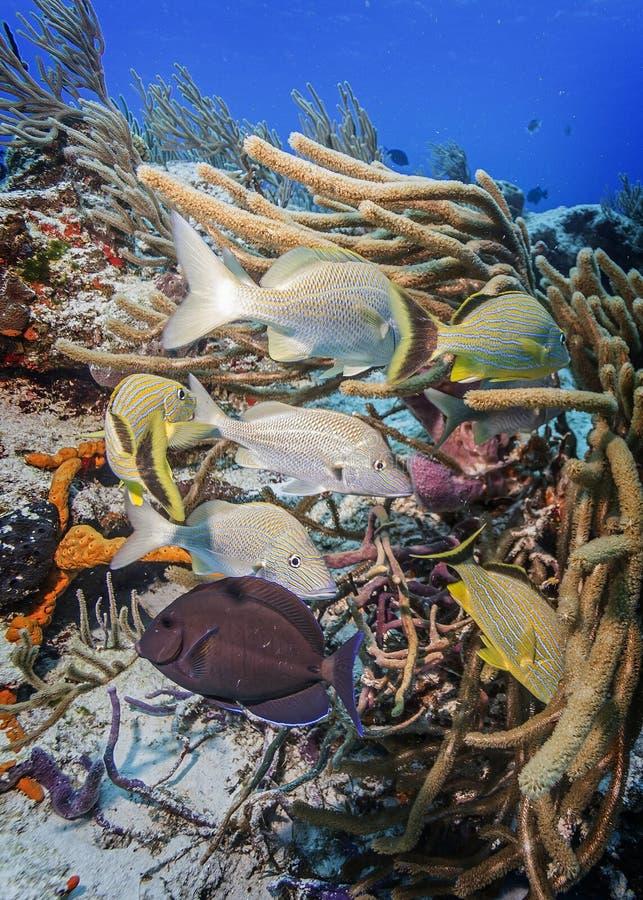 Maldives Szusowate rafy koralowe obrazy stock
