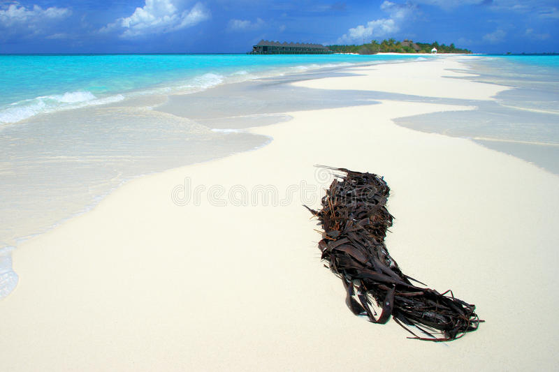 Maldives: Tropical island. Bungalows in the Island of Kuredu in Maldives royalty free stock photos