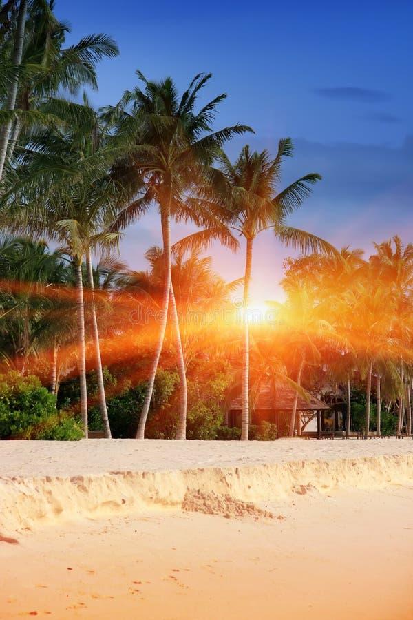 maldives Una costa de la playa arenosa, de la palma y de mar imagen de archivo