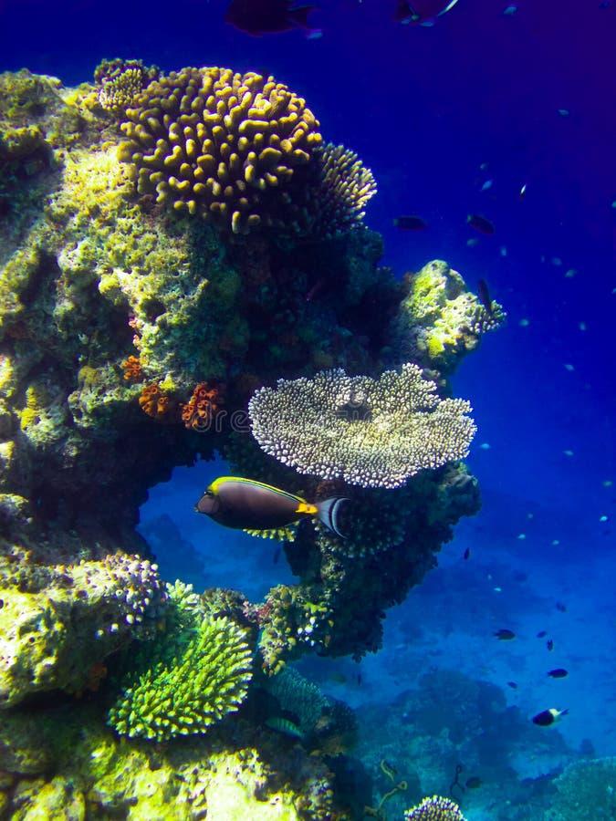 maldives under vattenvärlden royaltyfri foto
