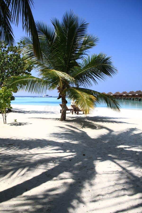 Maldivian海岛度假村海滩棕榈树、位子和和平的Ocea 免版税图库摄影