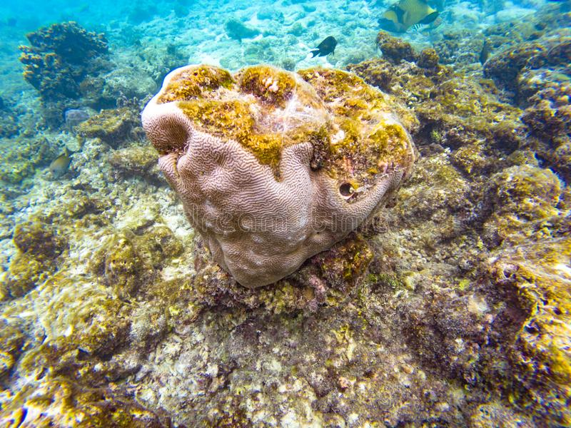 Maldivian κοράλλια νησιών στοκ φωτογραφία με δικαίωμα ελεύθερης χρήσης