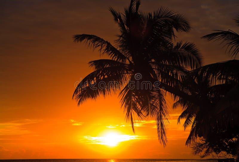 Download Maldivian Sunset stock image. Image of beautiful, sand - 11732911