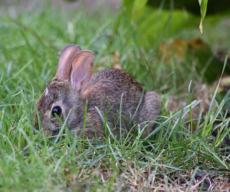 Maleńki królik fotografia stock