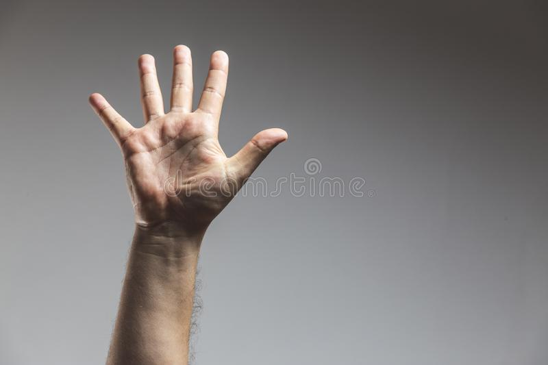 male adult hand showing number five gesture in studio shot isolated on grey background - Male hand palm stock image