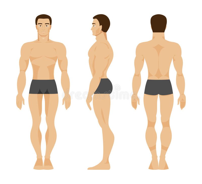 Male anatomy. Vector Illustration stock illustration