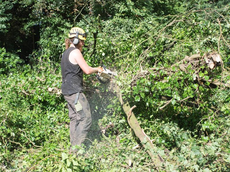 Male Arborist using a chainsaw clearing small branches. royalty free stock photography