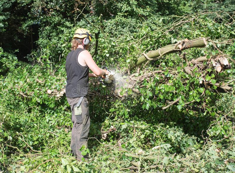 Male Arborist using a chainsaw on the ground. royalty free stock photo