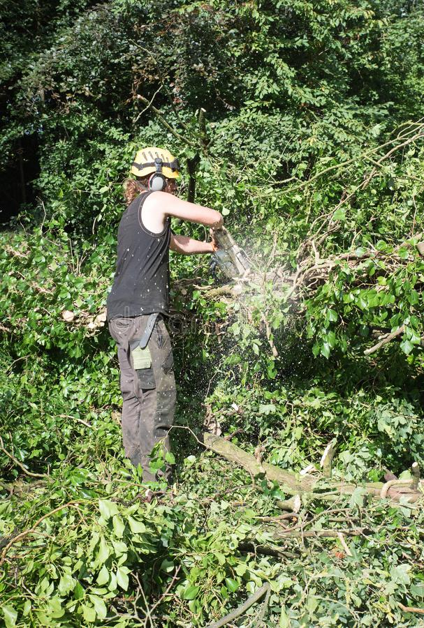 Male Arborist using a chainsaw works on a fallen tree. stock photo