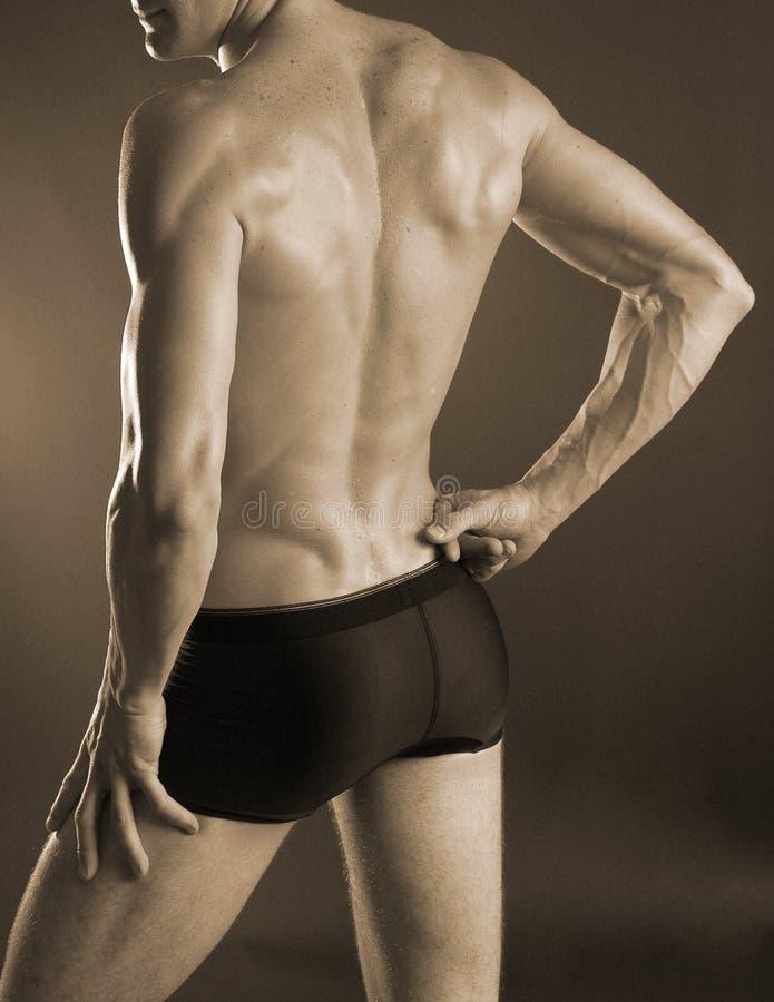 Download Male back stock image. Image of body, massage, torso, spine - 470305