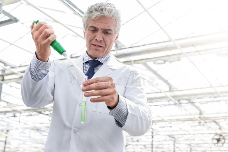 Male biochemist pouring chemical in test tube with pipette in plant nursery royalty free stock photos