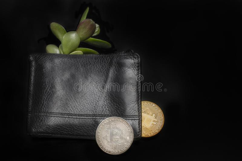 Male black wallet with bitcoin money tree. Men`s black wallet with bitcoins and the money tree. On a dark background business composition with space for text stock photos