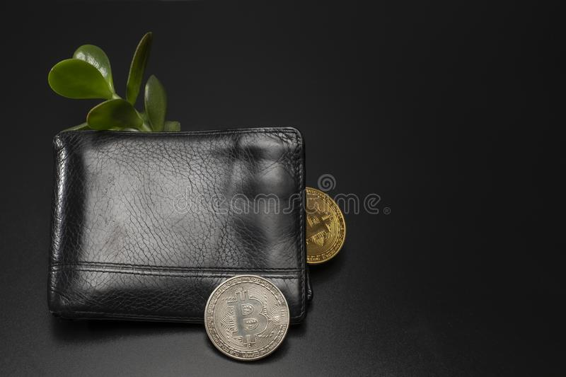 Male black wallet with bitcoin money tree. Men`s black wallet with bitcoins and the money tree. On a dark background business composition with space for text royalty free stock photography